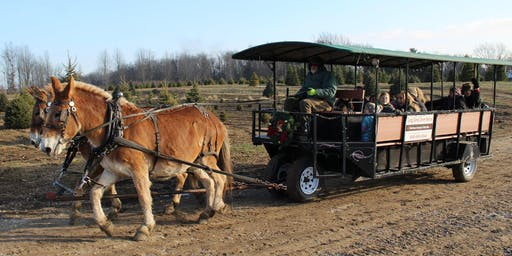 Carriage Rides through our fields