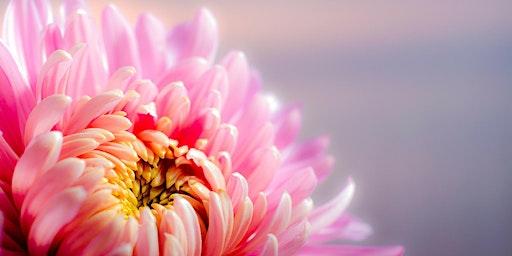 Free Meditation Classes for Women