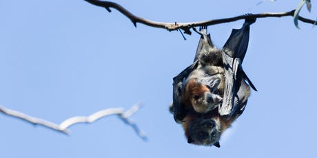 Flying Fox Discovery Tour tickets