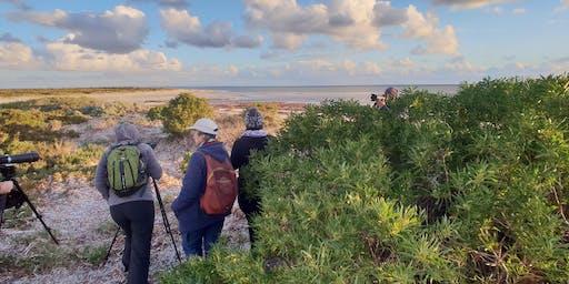 Ranger guided sunset walks - Adelaide Shorebird and Dolphin Festival