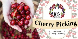 Cherry Picking at 10's Estate in Mudgee (14 - 17 Nov...