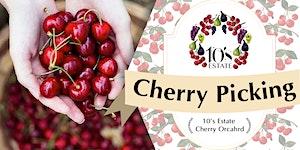 Cherry Picking at 10's Estate in Mudgee (14 - 17 Nov...