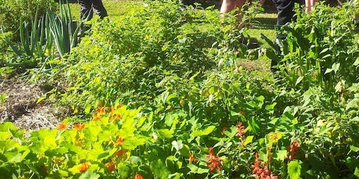 Green Living Workshop: Water Wise Vegetable Gardening at Bateau Bay  Community Garden