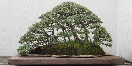 Australian Native Bonsai: Principles and Practices. Sunday 31 May 2020 tickets
