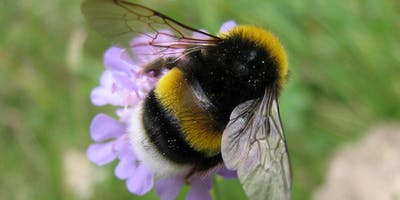 The loss of bumblebees