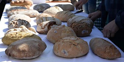 Open Forno: Hai mai desiderato cuocere il tuo pane in un forno a legna?