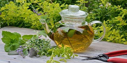 Spice up your Tea with Herbs and Master Gardeners!