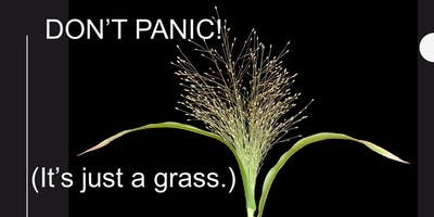 Don't Panic! (It's just grass.)