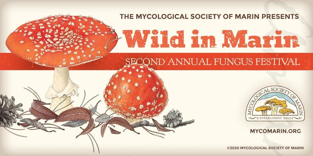 Mushroom Festival 2020.Wild In Marin 2nd Annual Mycomarin Fungus Festival Tickets