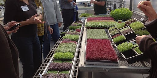 Microgreens Workshop for Homeowners