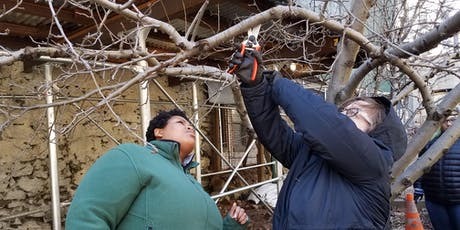 Open Orchard School: Winter Fruit Tree Pruning Basics tickets