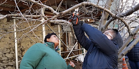 Open Orchard School: Winter Fruit Tree Pruning Basics tickets