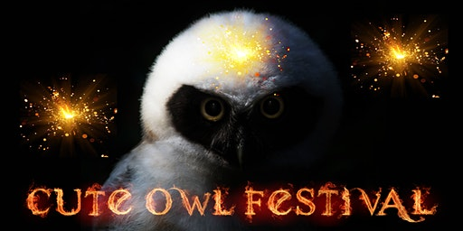 Cute Owl Festival