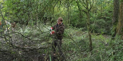 Conservation Work Party - Salcey Forest, Feb 2020