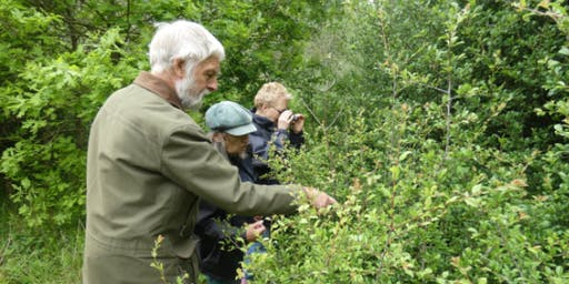 Brown Hairstreak Butterfly Egg  Search