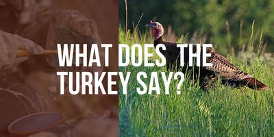 What Does a Turkey Say?