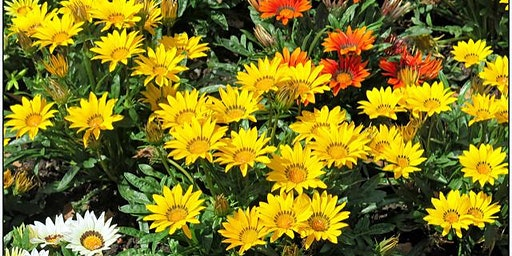 Annuals and Perennials for Central Florida - Jessie Brock Community Center