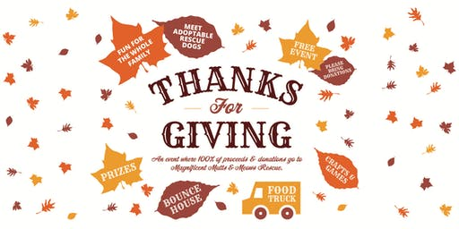 Thanks For Giving Festival – Benefiting Mag. Mutts & Meows