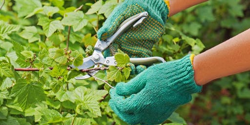 Selecting, Planting and Pruning Trees and Shrubs - Jessie Brock Community Center