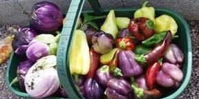 Basics of Vegetable Gardening in Central Florida - Jessie Brock Community Center