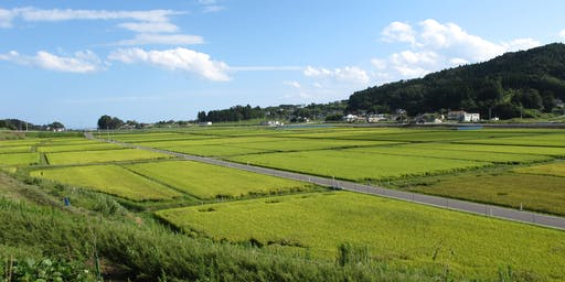 Rice | National Agricultural Research Organization of Japan