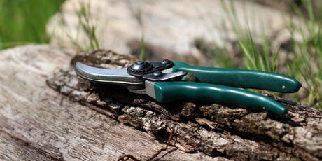 Snip it, Clip it, Basics of Pruning tickets