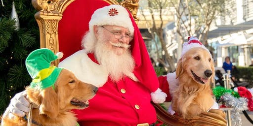Santa Paws Dog Photos