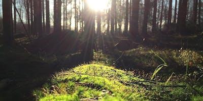 Grounding and Recharging Meditation