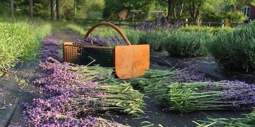 5th Annual Lavender Tasting Event