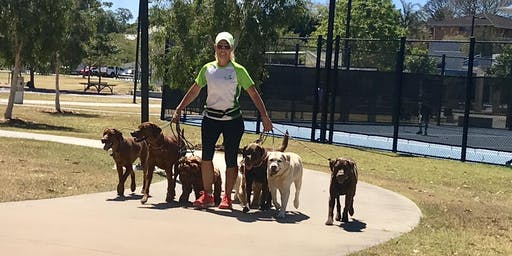 SOS Dogs - Looking for volunteers