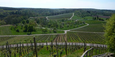 Single-Wanderung Kloster Maulbronn (25-45)