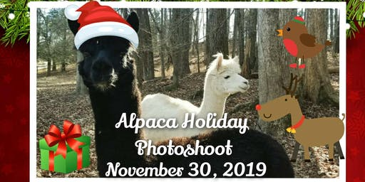 Alpaca Holiday Photoshoot