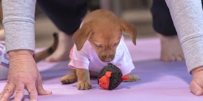 Puppy Yoga - Fort Collins