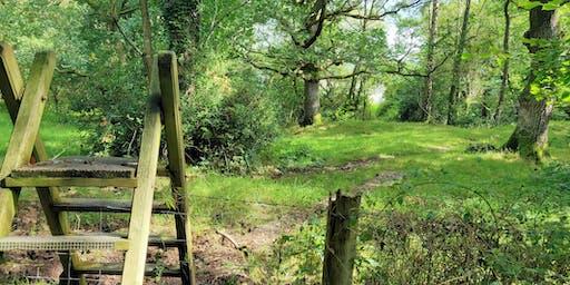 Half-day Mindfulness Retreat Walk: Rowen, Conwy Valley 16 Nov