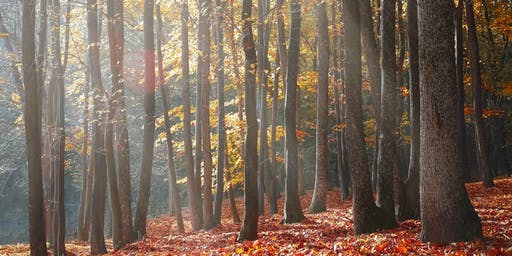 Forest Bathing Experience SW London