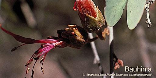 Brisbane: Level 1 & Australian Bush Flower Essences March 2020