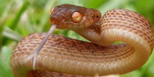 Snake Awareness Workshop - Mullumbimby