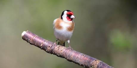 Big Garden Birdwatch bird ringing demonstration tickets