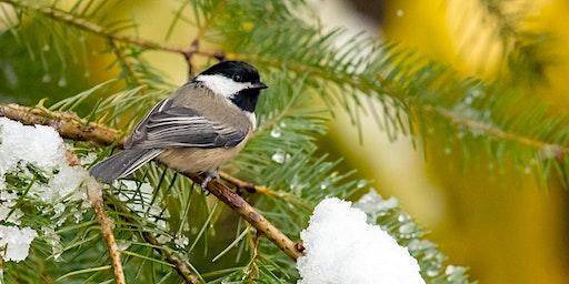 Rockwood Christmas Bird Count Walk