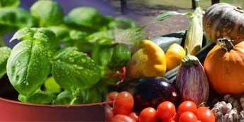 Home Harvest Picnic 2020