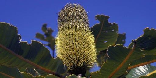 Sydney: Numerology & Australian Bush Flower Essences Workshop August 2020