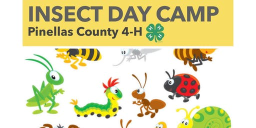 Insect Day Camp