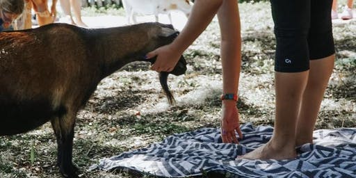 Pop Up Goat Yoga weekend in Ft. Myers