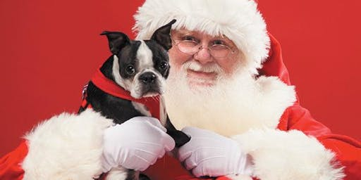 Santa is coming to the Vineyard at Hershey - Dog Photos
