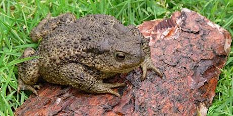 Amphibian Ecology and Survey Techniques tickets