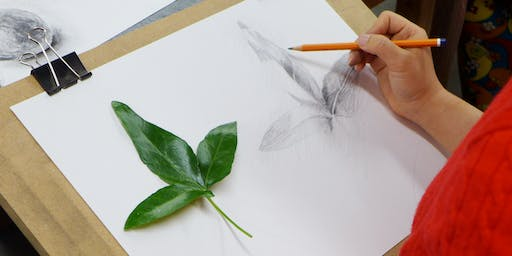 Drawing Inspiration from Nature: Part Two