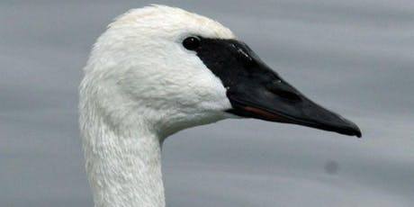 Swans in the Skagit Valley tickets