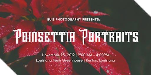 Poinsettia Portraits