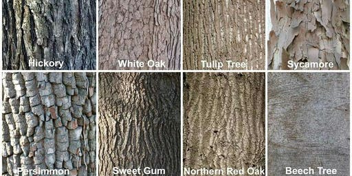 Guided Hike: Fall Tree Identification