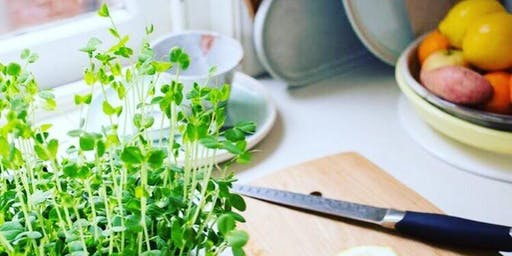 Grow Your Own Microgreens  - North Sydney Council Seniors Festival